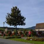 De bloemenzee begint al net buiten het centrum van Bergheim